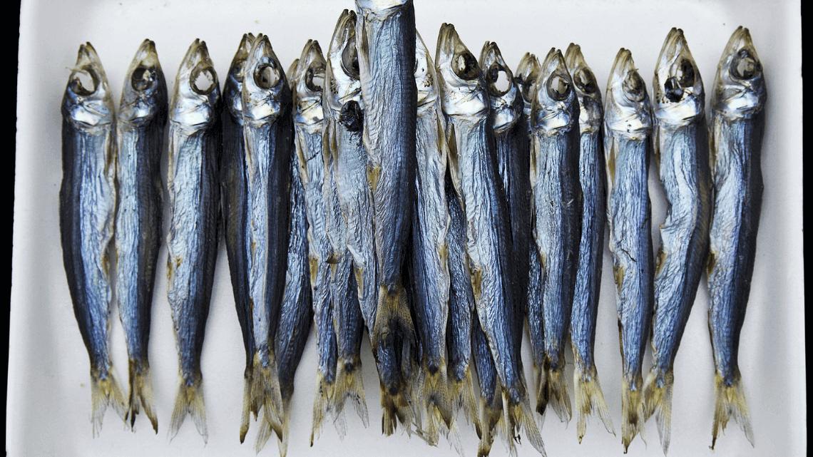 Anchovies from Tsukiji Fish Market, Tokyo, Japan
